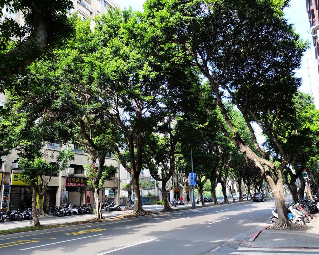 台北市内の街路樹が並ぶストリート