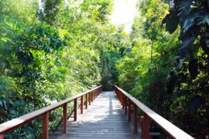 ランカウイのリゾートホテル、ザ・ダタイの緑あふれる遊歩道